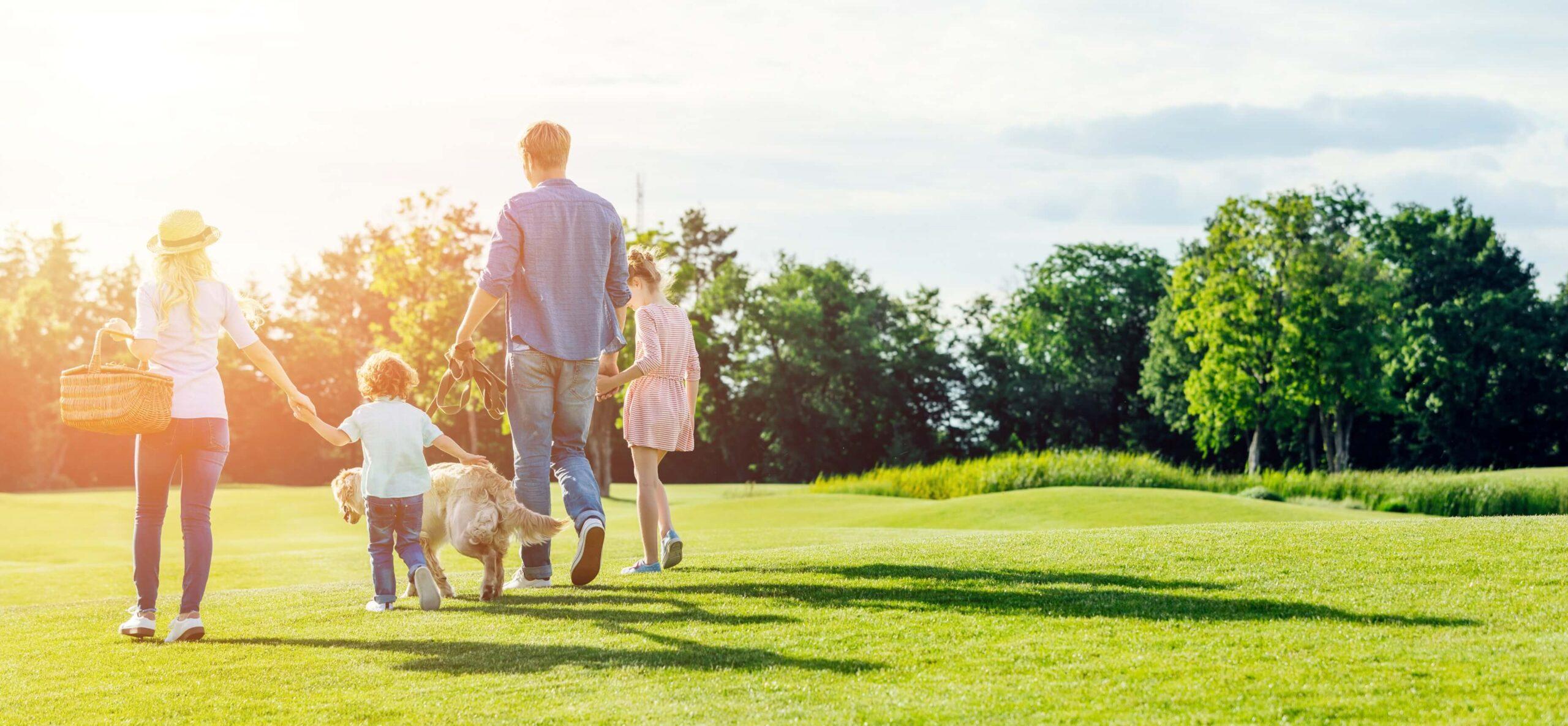 Założymy dla Ciebie trawnik o jakim zawsze marzyłeś!