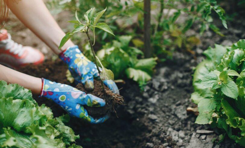 Widzimy potencjał wkażdym ogrodzie, odWas zależy  czypozwolicie Nam go zaprezentować